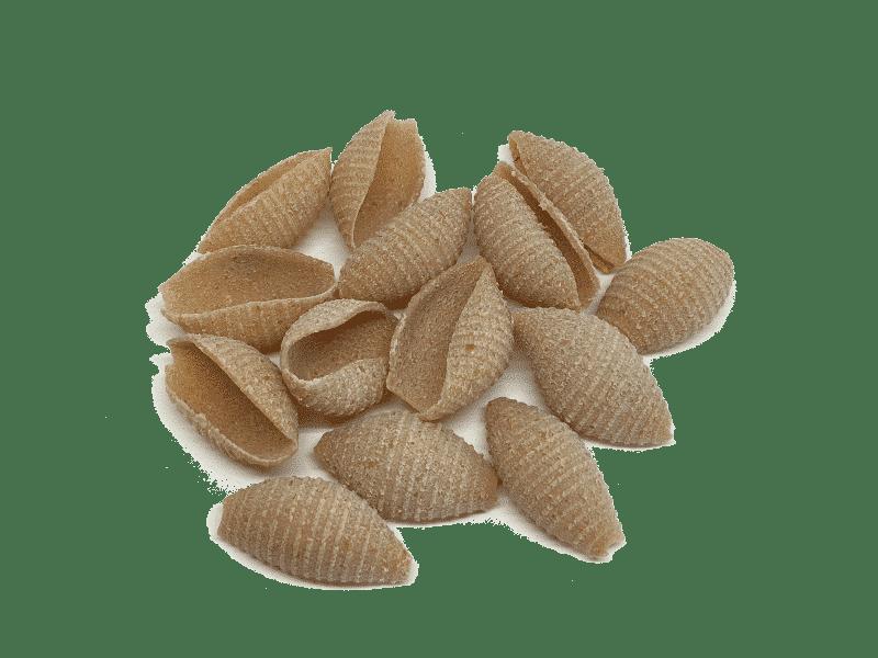 conchas-trigo-khorasan