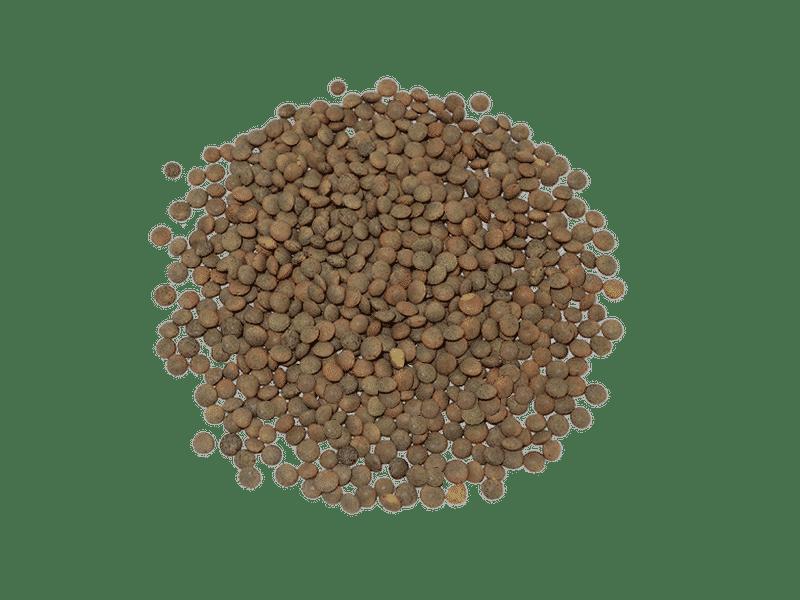 lenteja-pardina-eco