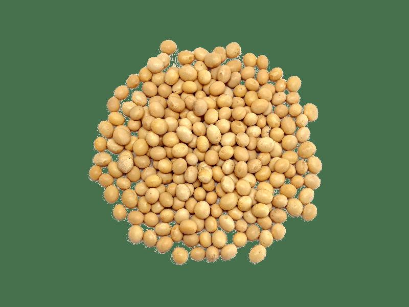 soja-amarilla-2